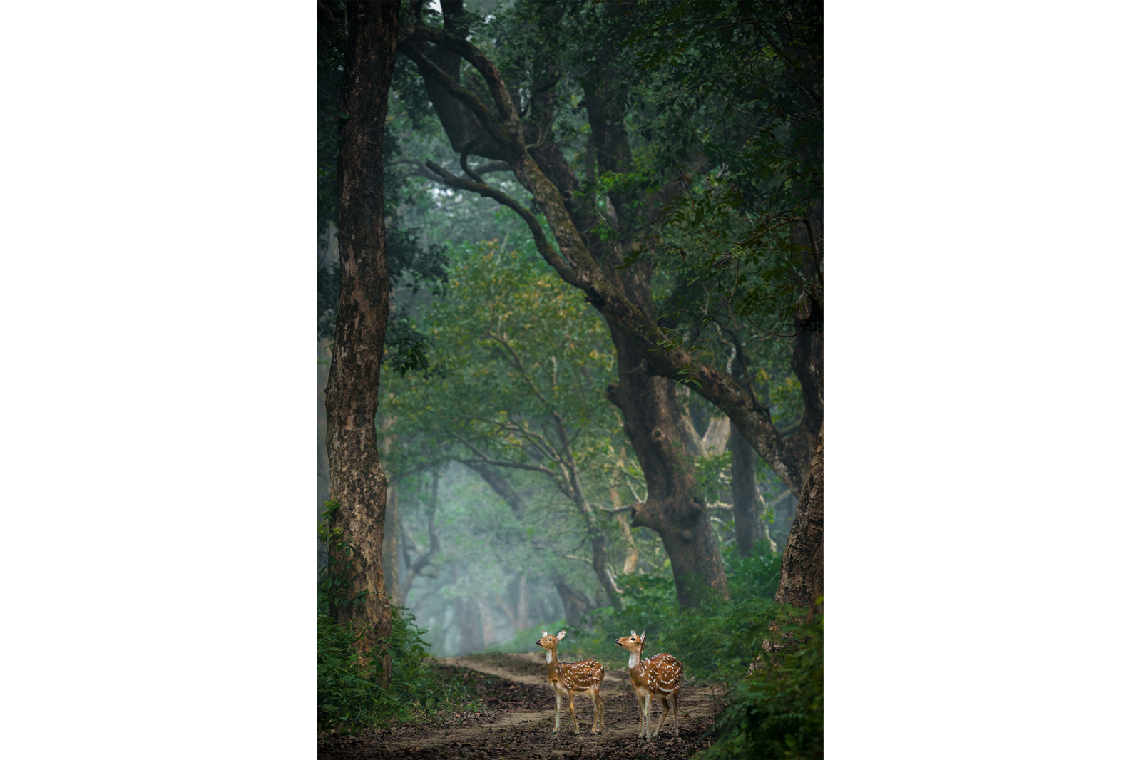 deers in a forest alpha 9