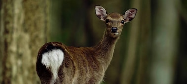 Portrait of a deer, illustrating the camera's use of Fast Hybrid AF when making movies